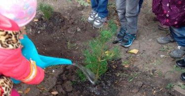 «Посадим новое деревце»